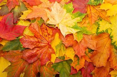AutumnChung